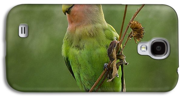 Lovely Little Lovebird  Galaxy S4 Case by Saija  Lehtonen