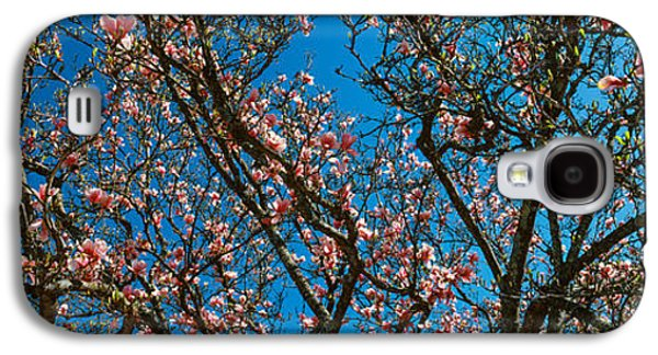 Cherry Blossoms Galaxy S4 Cases - Low Angle View Of Cherry Trees Galaxy S4 Case by Panoramic Images