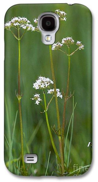 Fens Galaxy S4 Cases - Marsh Valerian Valeriana Dioica Galaxy S4 Case by Bob Gibbons