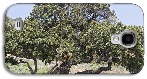 Torn Galaxy S4 Cases - Mastic Tree Pistacia Lentiscus Var.chia Galaxy S4 Case by Bob Gibbons