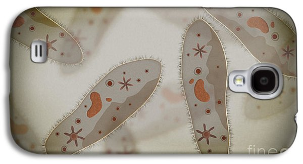 Unicellular Galaxy S4 Cases - Microscopic View Of Paramecium Galaxy S4 Case by Stocktrek Images