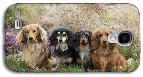 Miniature Photographs Galaxy S4 Cases - Miniature Long-haired Dachshunds Galaxy S4 Case by John Daniels