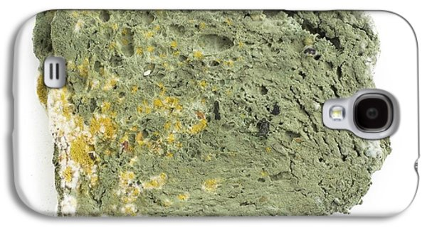 Mould On Bread Galaxy S4 Case by Science Photo Library
