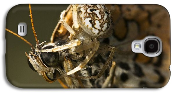 Butterfly Prey Galaxy S4 Cases - Oak Spider And Prey Galaxy S4 Case by Paul Harcourt Davies