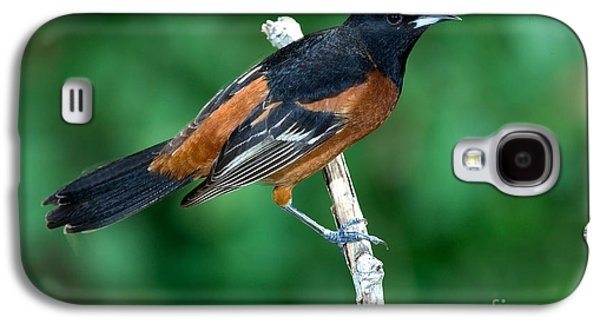 Wild Orchards Galaxy S4 Cases - Orchard Oriole Icterus Spurius Adult Galaxy S4 Case by Anthony Mercieca