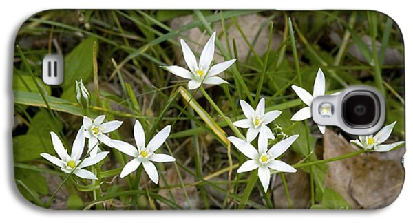 Star Of Bethlehem Galaxy S4 Cases - Ornithogalum Umbellatum Galaxy S4 Case by Bob Gibbons