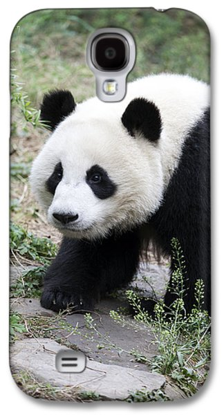 Animal Photographs Galaxy S4 Cases - Panda Galaxy S4 Case by King Wu