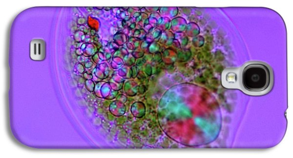 Phacus Sp. Galaxy S4 Case by Marek Mis