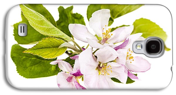 Apple Trees Galaxy S4 Cases - Pink apple blossoms Galaxy S4 Case by Elena Elisseeva