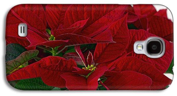 Star Of Bethlehem Galaxy S4 Cases -  Classic Poinsettia 3 Galaxy S4 Case by Sharon  Talson
