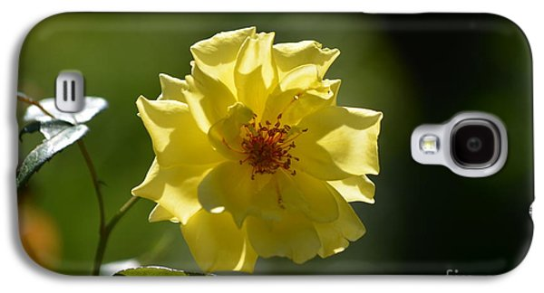Floral Sculptures Galaxy S4 Cases - Pretty Yellow Rose Blossom Galaxy S4 Case by DejaVu Designs