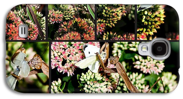Butterfly Prey Galaxy S4 Cases - Preying Mantis Galaxy S4 Case by Lance Theroux