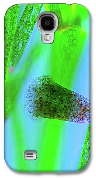 Protozoan On Green Algae Galaxy S4 Case by Marek Mis