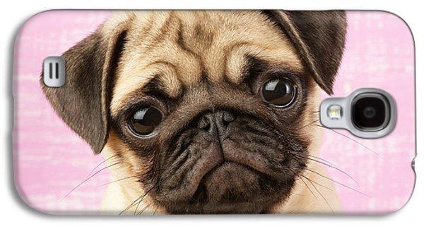 Puppies Galaxy S4 Cases - Pug Portrait Galaxy S4 Case by Greg Cuddiford