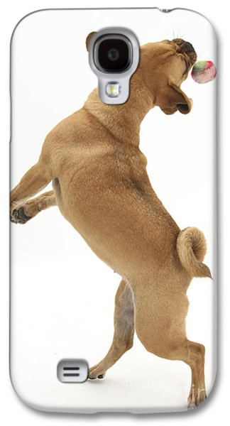 Dog Playing Ball Galaxy S4 Cases - Puggle Catching A Ball Galaxy S4 Case by Mark Taylor