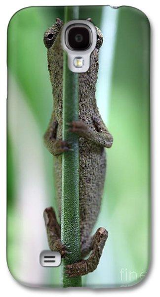 Chameleon Galaxy S4 Cases - Pygmy chameleon Galaxy S4 Case by Brandon Alms
