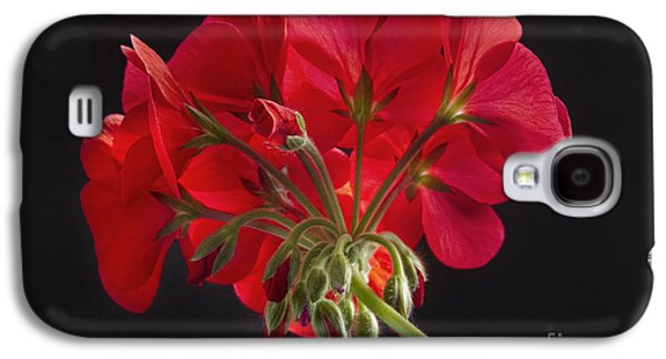 Red Geraniums Galaxy S4 Cases - Red Geranium In Progress Galaxy S4 Case by James BO  Insogna