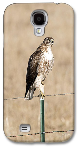 Red Tail Hawks Galaxy S4 Cases - Red Tail Stare Galaxy S4 Case by Mike Dawson