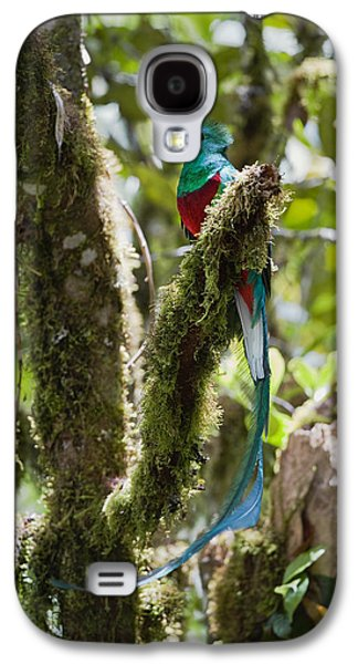 Animals and Earth - Galaxy S4 Cases - Resplendent Quetzal Male Costa Rica Galaxy S4 Case by Konrad Wothe