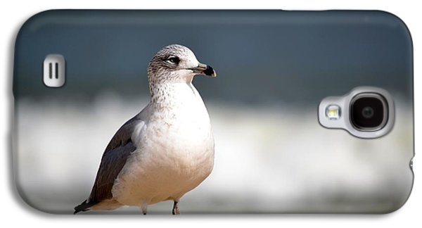 Biology Pyrography Galaxy S4 Cases - Ring Billed Gull Galaxy S4 Case by Krystal Goldie