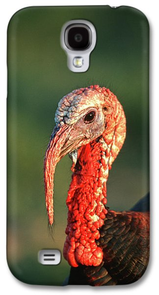 Rio Grande Wild Turkey (meleagris Galaxy S4 Case by Richard and Susan Day