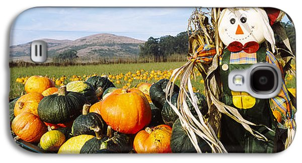 Half Moon Bay Galaxy S4 Cases - Scarecrow In Pumpkin Patch, Half Moon Galaxy S4 Case by Panoramic Images