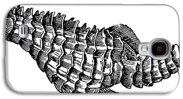 Seahorse Galaxy S4 Case by Unknown