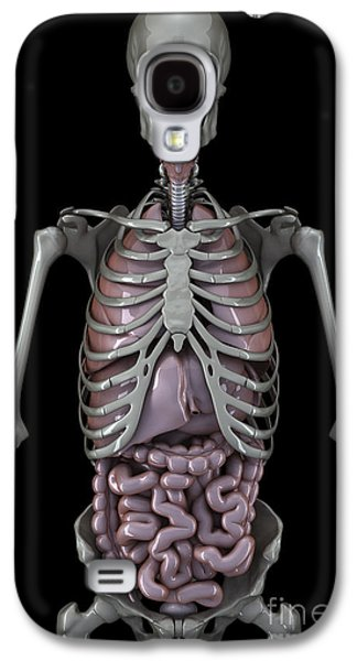 Internal Organs Galaxy S4 Cases - Skeleton And Internal Organs Galaxy S4 Case by Science Picture Co