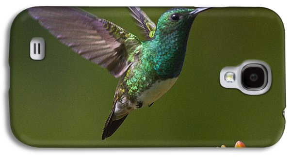 Flying Animal Galaxy S4 Cases - Snowy-bellied Hummingbird Galaxy S4 Case by Heiko Koehrer-Wagner