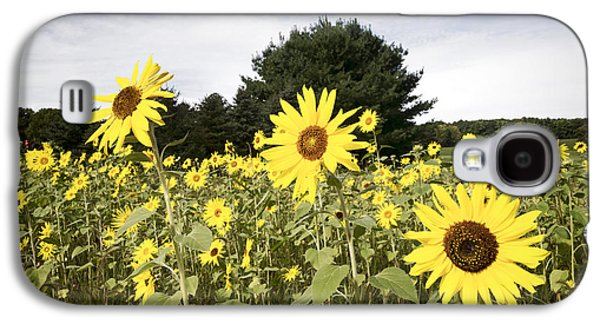 Sunflower Patch Galaxy S4 Cases - Sunflower Patch Galaxy S4 Case by Ray Summers Photography