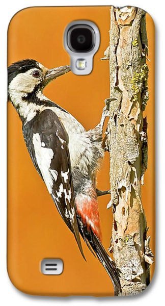 Syrian Woodpecker (dendrocopos Syriacus) Galaxy S4 Case by Photostock-israel
