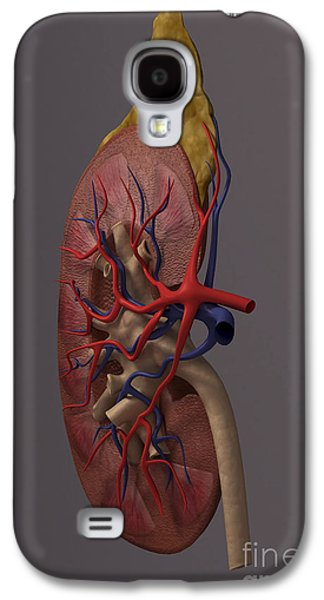 Internal Organs Galaxy S4 Cases - The Kidney Sectioned Galaxy S4 Case by Science Picture Co