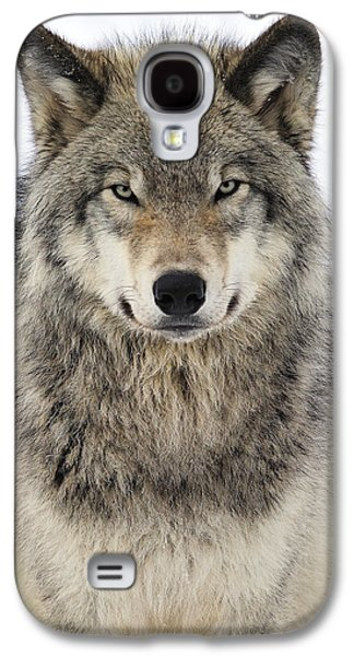 Quebec Galaxy S4 Cases - Timber Wolf Portrait Galaxy S4 Case by Tony Beck