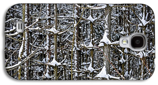 Winter Trees Photographs Galaxy S4 Cases - Tree trunks in winter Galaxy S4 Case by Elena Elisseeva