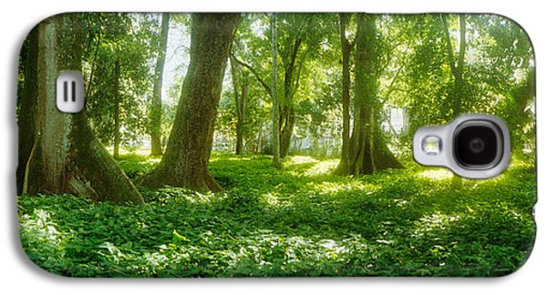 Botanical Galaxy S4 Cases - Trees In A Botanical Garden, Jardim Galaxy S4 Case by Panoramic Images