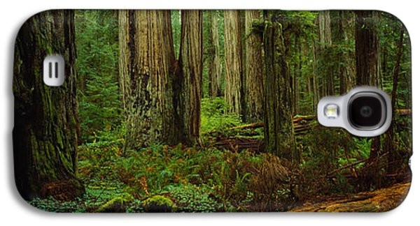 Forest Floor Galaxy S4 Cases - Trees In A Forest, Hoh Rainforest Galaxy S4 Case by Panoramic Images