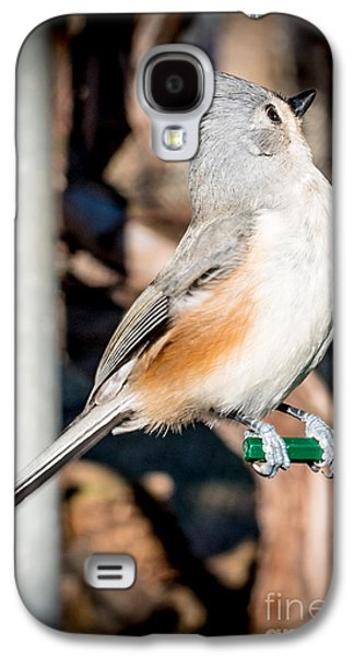 Tufted Titmouse Galaxy S4 Cases - Tufted Titmouse Galaxy S4 Case by Jim DeLillo