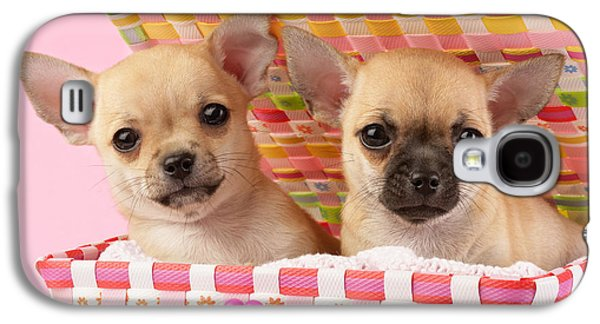 Puppies Galaxy S4 Cases - Two Chihuahuas Galaxy S4 Case by Greg Cuddiford