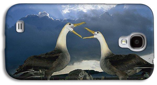 Wildlife Celebration Galaxy S4 Cases - Waved Albatross Courtship Dance Galaxy S4 Case by Tui De Roy