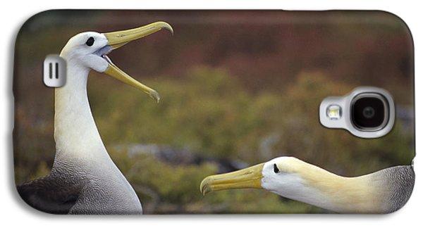 Wildlife Celebration Galaxy S4 Cases - Waved Albatross Courtship Display Galaxy S4 Case by Tui De Roy