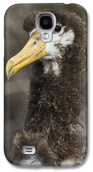 Waved Albatross Molting Juvenile Galaxy S4 Case by Pete Oxford