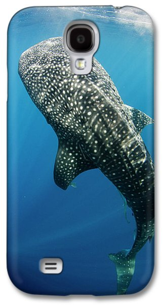 Whale Shark Feeding At Bagan Galaxy S4 Case by Pete Oxford