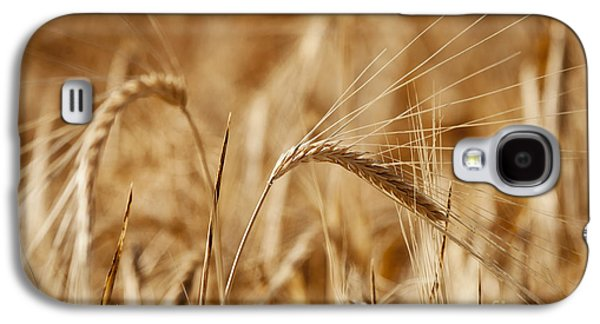 Food And Beverage Pyrography Galaxy S4 Cases - Wheat Galaxy S4 Case by Jelena Jovanovic