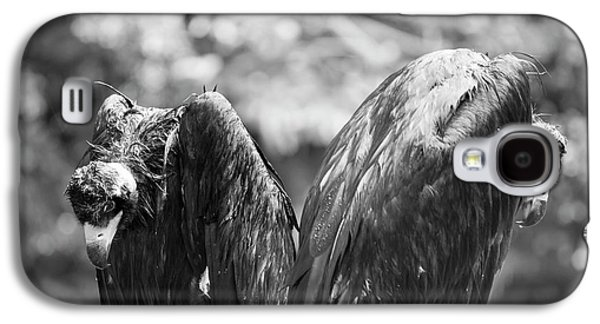 White-backed Vultures In The Rain Galaxy S4 Case by Pan Xunbin