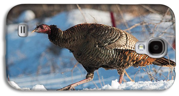 Wild Turkey Galaxy S4 Case by Tim  Carey