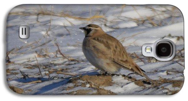 Winter Bird Galaxy S4 Case by Jeff Swan