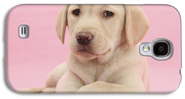 House Pet Galaxy S4 Cases - Yellow Labrador Retriever Galaxy S4 Case by Mark Taylor
