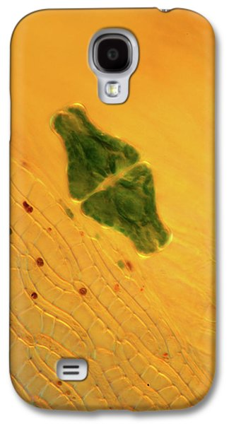 Desmid On Sphagnum Moss Galaxy S4 Case by Marek Mis