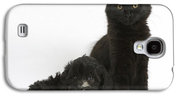 Old Maine Houses Galaxy S4 Cases - Kitten And Puppy Galaxy S4 Case by Mark Taylor
