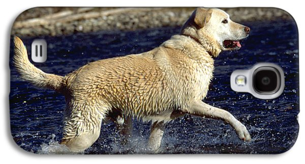 Water Play Galaxy S4 Cases - Yellow Labrador Retriever Galaxy S4 Case by William H. Mullins